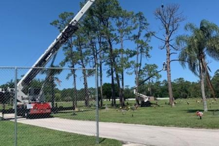 Dead pine removal, Fountain Head Cemetery, Palm Bay