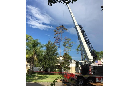 Dead pine removal with 110 ton crane, West Melbourne